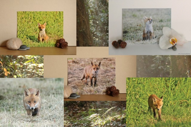 5-cartes-renards